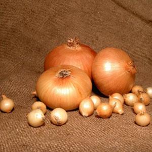 купить семена лука Штутгартен